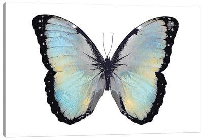 Blue Hue Butterfly Canvas Art Print