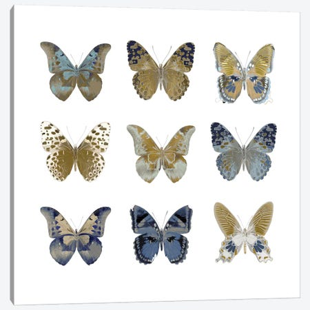 Butterfly Study I Canvas Print #JUL20} by Julia Bosco Canvas Art Print