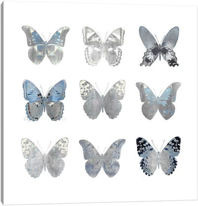 Butterfly Study II Canvas Art Print