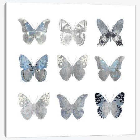 Butterfly Study II Canvas Print #JUL21} by Julia Bosco Canvas Art Print