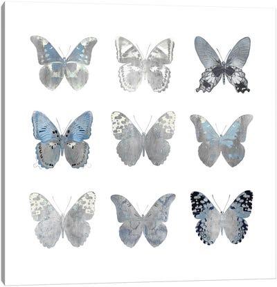 Butterfly Study II Canvas Art Print