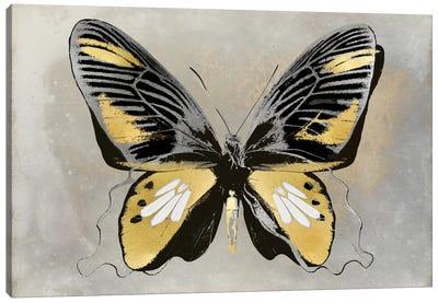 Butterfly Study III Canvas Art Print