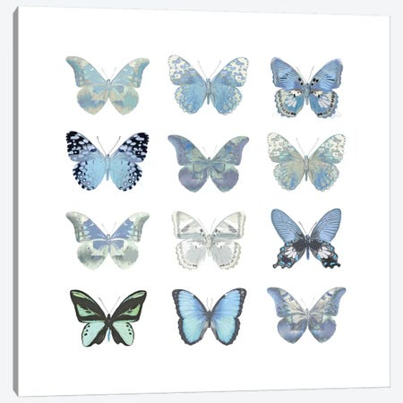 Butterfly Study In Blue I Canvas Print #JUL23} by Julia Bosco Canvas Print