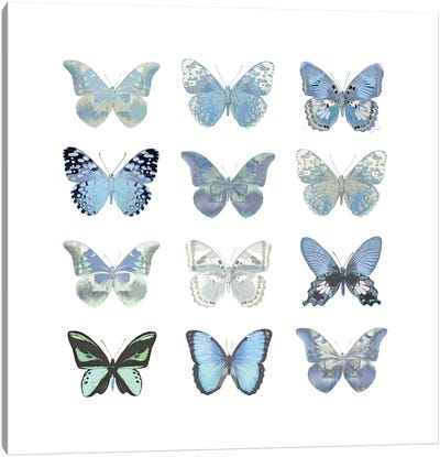 Butterfly Study In Blue I Canvas Art Print