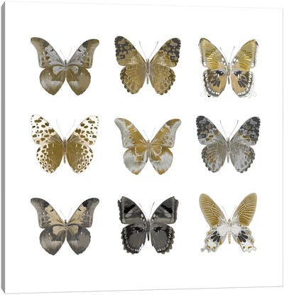 Butterfly Study In Gold I Canvas Art Print
