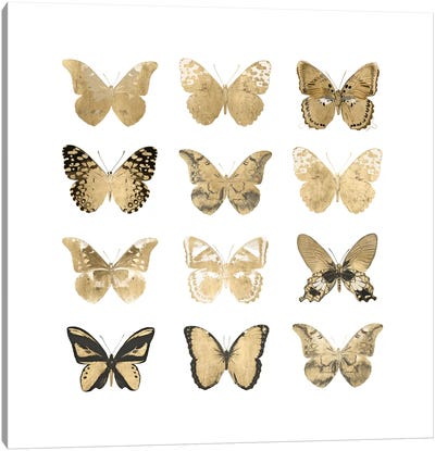 Butterfly Study In Gold II Canvas Art Print