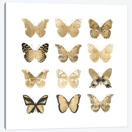 Butterfly Study In Gold II Canvas Print #JUL26} by Julia Bosco Canvas Wall Art