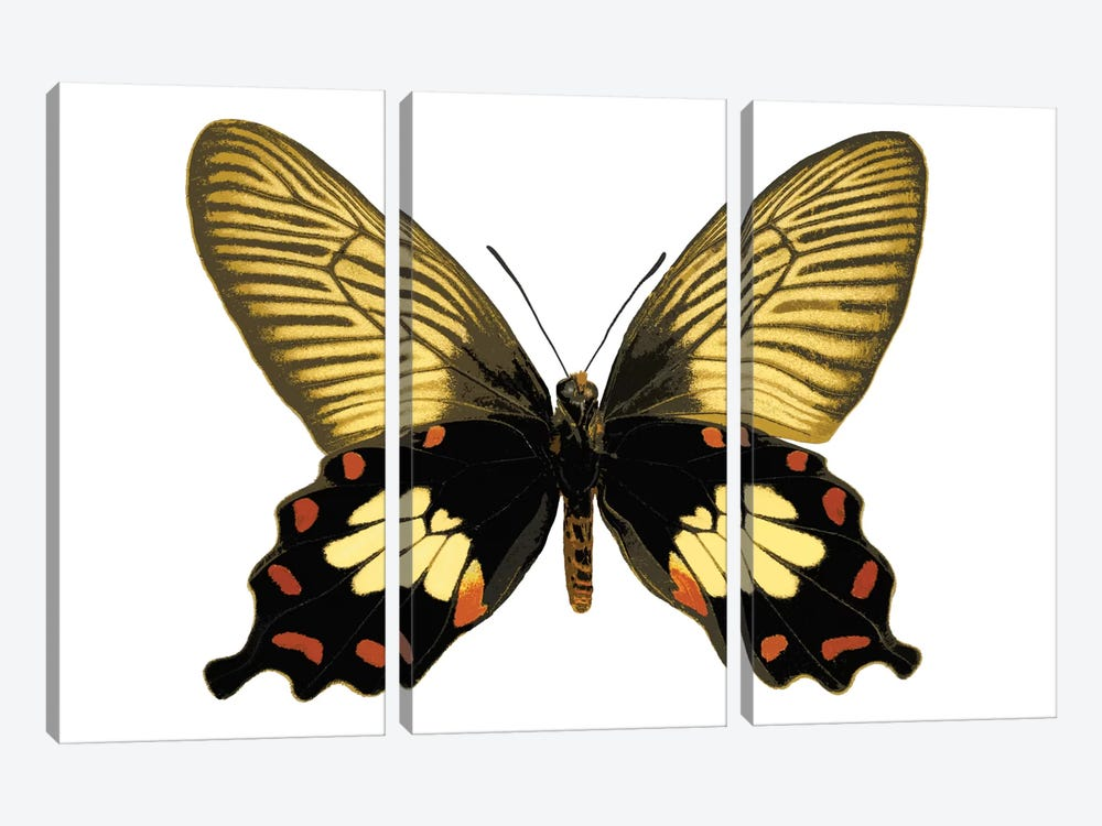 Butterfly With Orange 3-piece Canvas Art