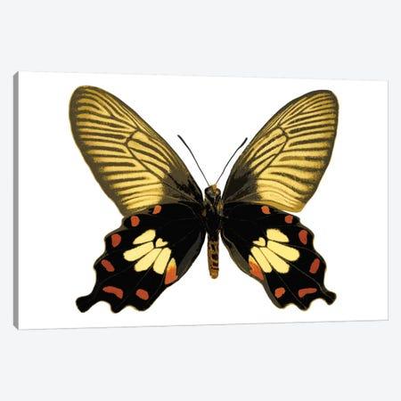 Butterfly With Orange Canvas Print #JUL29} by Julia Bosco Art Print