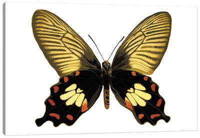 Butterfly With Orange Canvas Art Print