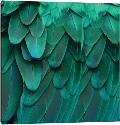 Feathered Friend In Aqua Canvas Print #JUL30