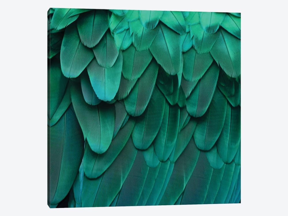 Feathered Friend In Aqua by Julia Bosco 1-piece Canvas Art