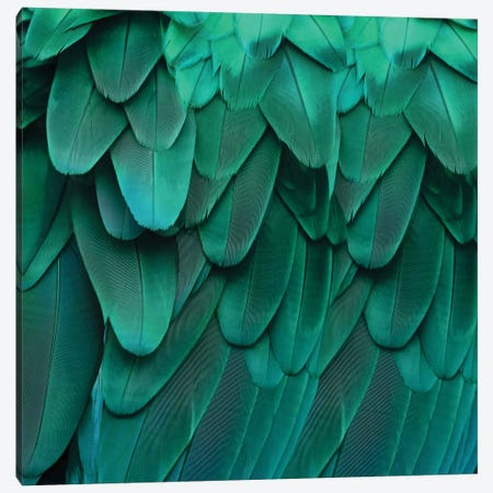Feathered Friend In Aqua Canvas Print #JUL30} by Julia Bosco Canvas Artwork