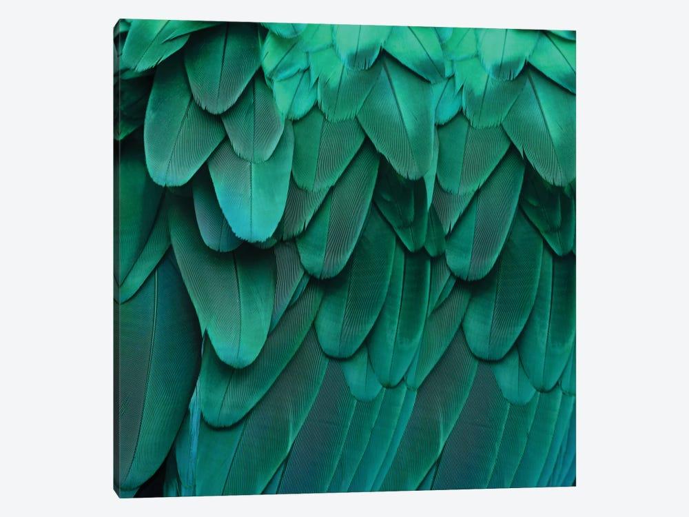 Feathered Friend In Aqua by Julia Bosco 1-piece Canvas Art