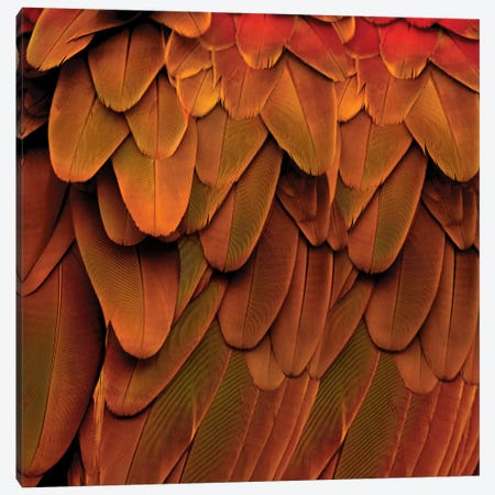 Feathered Friend In Burnt Orange Canvas Print #JUL31} by Julia Bosco Canvas Art