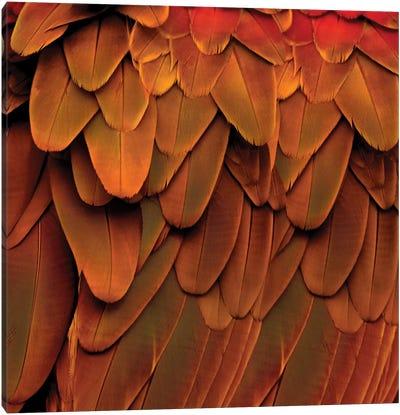 Feathered Friend In Burnt Orange Canvas Art Print