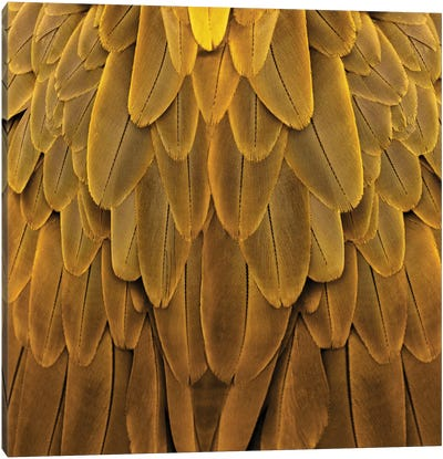 Feathered Friend In Golden Canvas Print #JUL32
