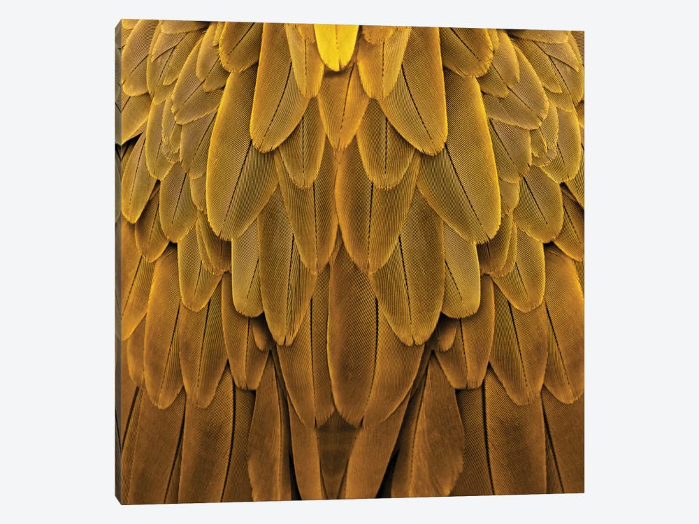 Feathered Friend In Golden by Julia Bosco 1-piece Canvas Wall Art