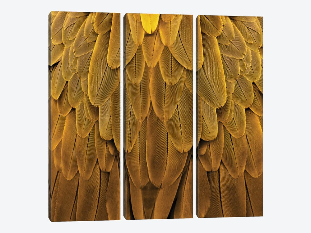 Feathered Friend In Golden by Julia Bosco 3-piece Canvas Artwork