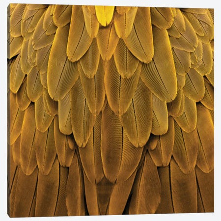 Feathered Friend In Golden Canvas Print #JUL32} by Julia Bosco Canvas Wall Art