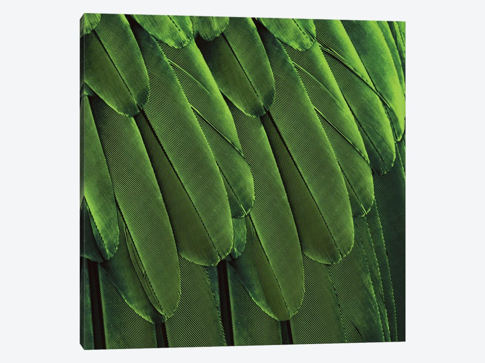 Feathered Friend In Green by Julia Bosco 1-piece Canvas Art Print