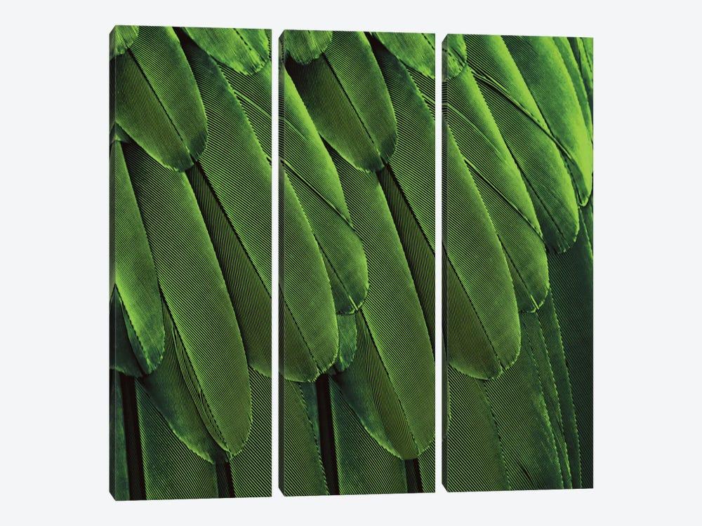 Feathered Friend In Green by Julia Bosco 3-piece Art Print