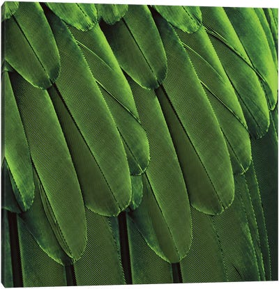 Feathered Friend In Green Canvas Print #JUL33