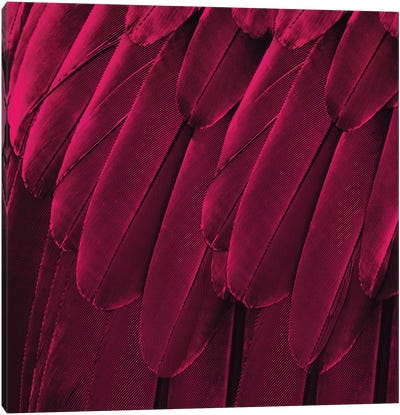 Feathered Friend In Magenta Canvas Art Print