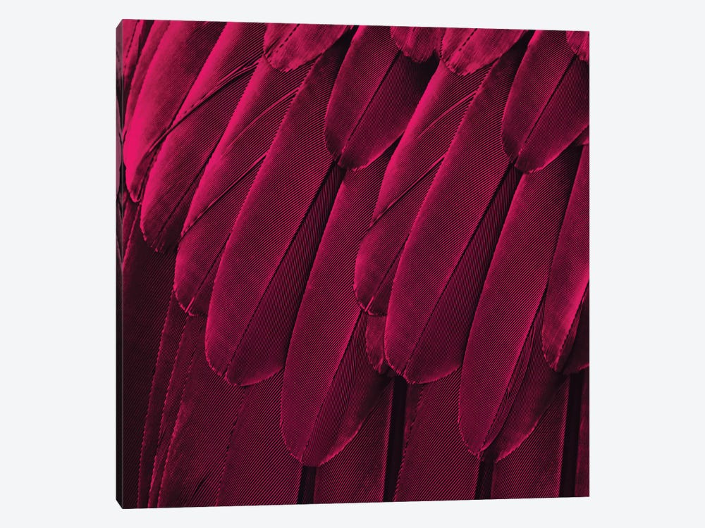 Feathered Friend In Magenta by Julia Bosco 1-piece Canvas Art Print