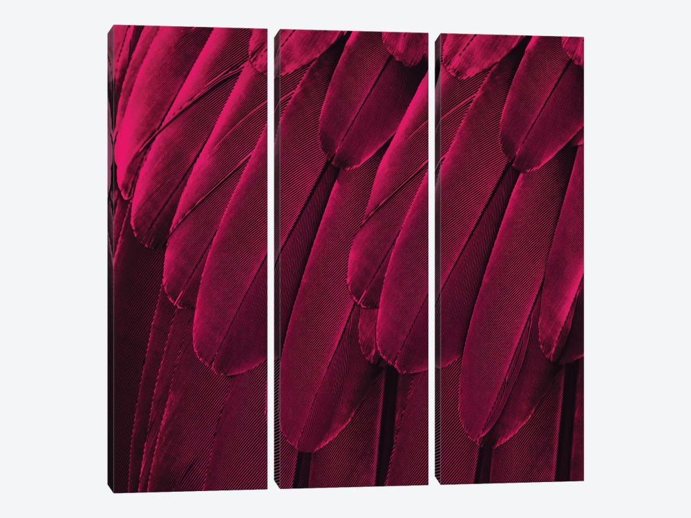 Feathered Friend In Magenta by Julia Bosco 3-piece Canvas Print