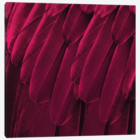 Feathered Friend In Magenta Canvas Print #JUL35} by Julia Bosco Art Print