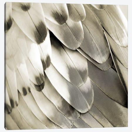 Feathered Friend In Pearl I Canvas Print #JUL36} by Julia Bosco Canvas Art Print