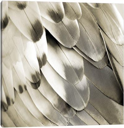 Feathered Friend In Pearl I Canvas Art Print