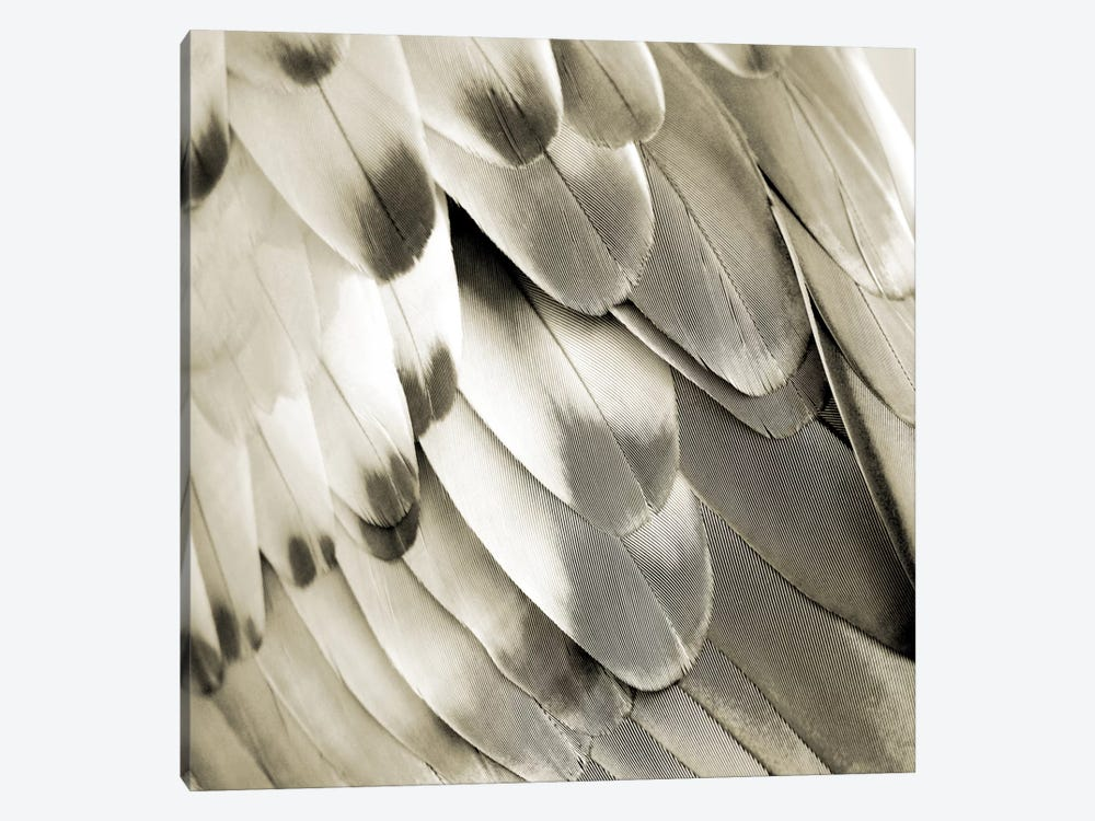 Feathered Friend In Pearl I by Julia Bosco 1-piece Canvas Artwork