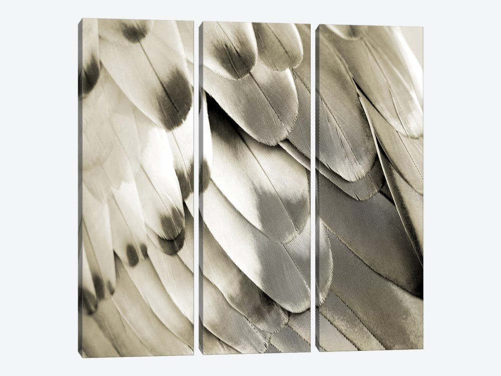 Feathered Friend In Pearl I by Julia Bosco 3-piece Canvas Artwork