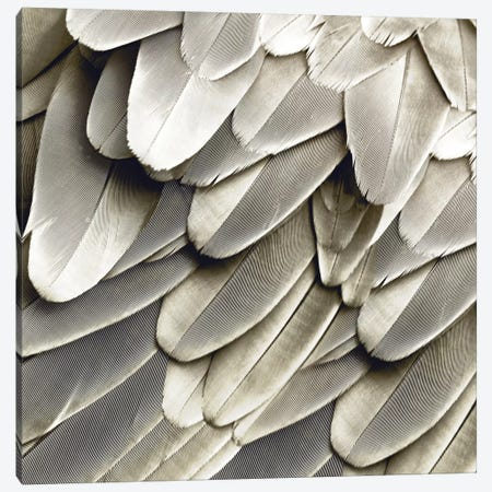Feathered Friend In Pearl III Canvas Print #JUL38} by Julia Bosco Canvas Artwork