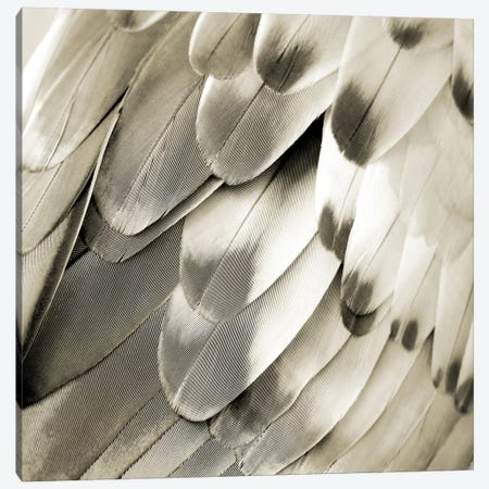 Feathered Friend In Pearl IV Canvas Print #JUL39} by Julia Bosco Canvas Art