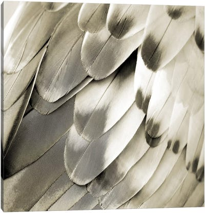 Feathered Friend In Pearl IV Canvas Art Print