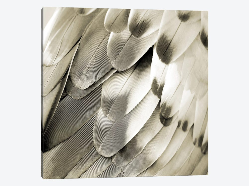 Feathered Friend In Pearl IV 1-piece Art Print