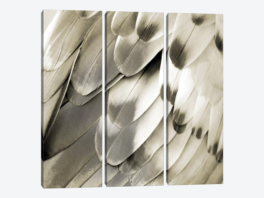 Feathered Friend In Pearl IV by Julia Bosco 3-piece Canvas Print