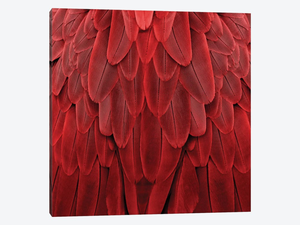 Feathered Friend In Red by Julia Bosco 1-piece Canvas Wall Art