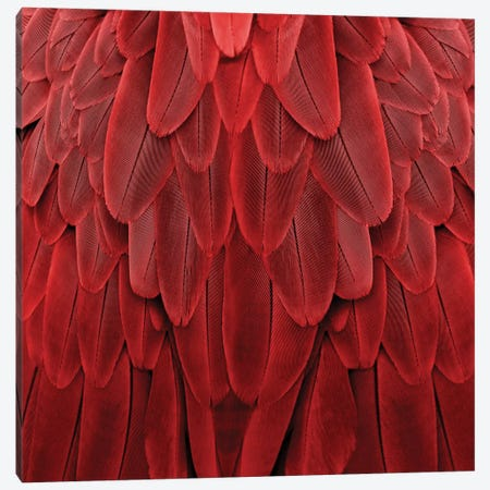 Feathered Friend In Red Canvas Print #JUL41} by Julia Bosco Art Print