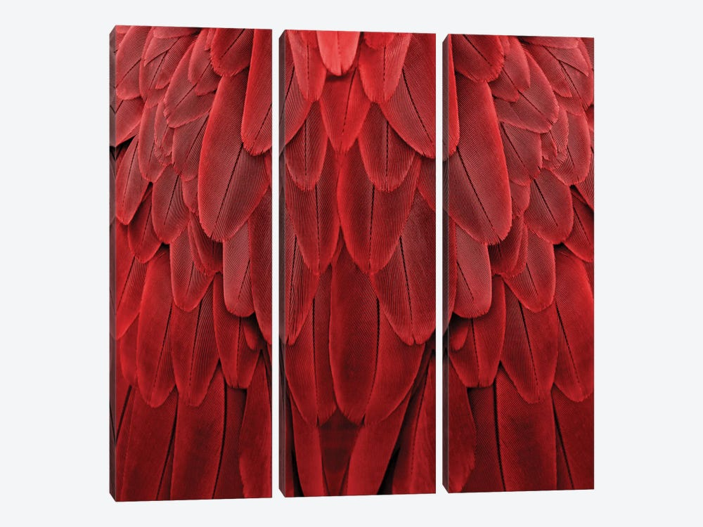 Feathered Friend In Red by Julia Bosco 3-piece Canvas Artwork