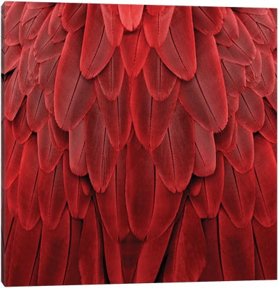 Feathered Friend In Red Canvas Art Print