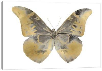 Golden Butterfly II Canvas Art Print