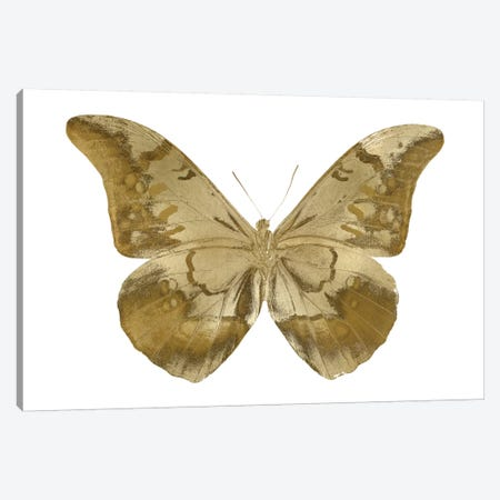 Golden Butterfly III Canvas Print #JUL44} by Julia Bosco Canvas Artwork