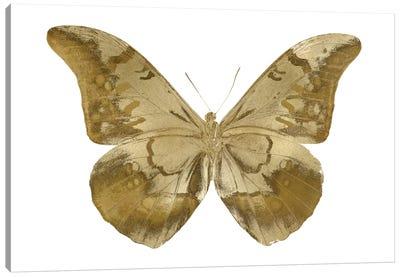 Golden Butterfly III Canvas Art Print