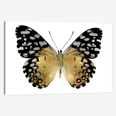 Golden Butterfly IV Canvas Print #JUL45} by Julia Bosco Canvas Artwork