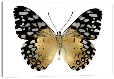 Golden Butterfly IV Canvas Art Print