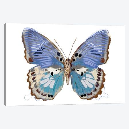 Golden Butterfly V Canvas Print #JUL46} by Julia Bosco Canvas Art